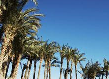Palm-trees Royalty Free Stock Photos