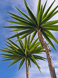 Palm trees. On blue sky background Royalty Free Stock Images