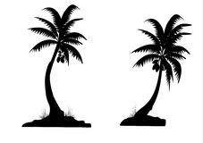 Palm trees. Two black palm trees on white background Royalty Free Stock Photography