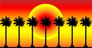Palm trees. Group of palm trees on at sunset background Stock Image
