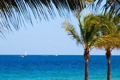 Palm Trees. View of the ocean from behind palm trees on A1A in Fort Lauderdale, Florida Stock Image
