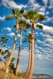 Palm Trees. On the Coast of California, USA stock photo