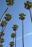 Palm trees. In California blue sky Royalty Free Stock Photos