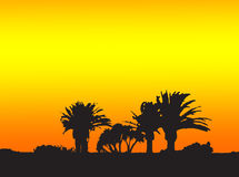 Palm trees. In the sunset, canbe used as wallpaper Royalty Free Stock Photos