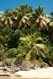 The Palm trees Royalty Free Stock Photos