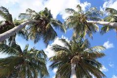 Palm trees. Palm tree on the beach Uppuveli in Sri Lanka Stock Photos