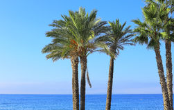 Palm trees. Group of palm trees against a blue sea and sky showing the horizon Royalty Free Stock Photo