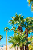 Palm trees Stock Photo