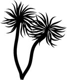 Palm trees Royalty Free Stock Images