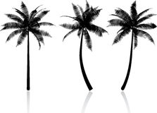 Palm trees. Detailed silhouettes of palm trees Royalty Free Stock Image