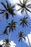 Palm trees. In Cherating, east Malaysia Stock Photo
