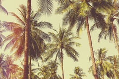 Free Palm Trees Royalty Free Stock Photo - 60001465