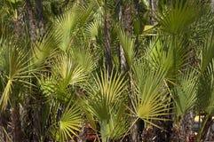 palm trees Στοκ Εικόνες