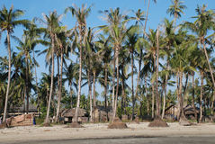 Palm trees. And village in Myanmar Royalty Free Stock Image