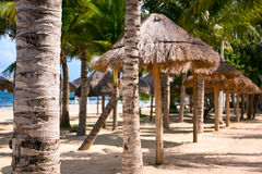 Palm trees. In Cancun holidays resort Stock Images
