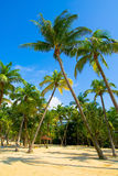 Palm Trees. By the beach Royalty Free Stock Photo