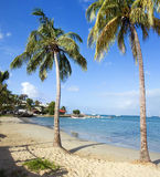 Palm trees. Little beach with palm trees in carribean sea Royalty Free Stock Photos