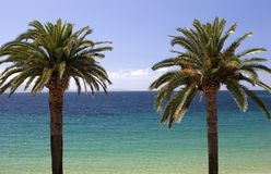 Palm trees. Tropical photograph of palm trees and the ocean stock photography