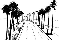 Palm Trees. Hand drawn image of costal highway with palm trees Stock Photography