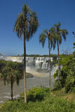 Palm trees against the background of the Iguazu Falls Royalty Free Stock Images