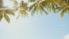 Palm trees against the background of a light blue sky in clear weather. Philippines. Palm trees against the background of a light blue sky in clear weather stock footage
