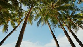 Palm trees against the background of a light blue sky in clear weather. Philippines. Palm trees against the background of a light blue sky in clear weather stock video footage