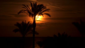 Palm trees against the background of the sun at dawn. Palm trees are near the sea. The sun is reflected in the water stock footage