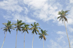 Palm trees against a beautiful clear sky Royalty Free Stock Photos