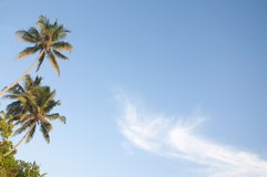 Palm trees against a beautiful clear sky Stock Photos