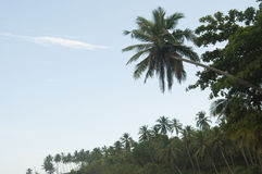 Palm trees against a beautiful clear sky Stock Photo