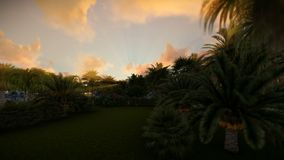 Palm trees against beautiful sunset, tilt. Hd video stock video footage