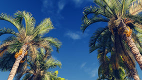 Palm trees against blue cloudy sky. Palm trees on the blue cloudy sky background at daytime Royalty Free Stock Image