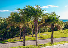 Palm trees Royalty Free Stock Photo