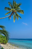 Palm trees against a blue sky .Beautiful palm trees against blue sunny sky.Palm trees on sky background Royalty Free Stock Photos
