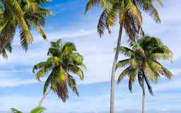Palm Trees Against a Blue Sky Stock Image