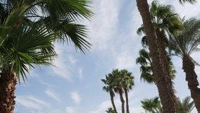 Palm trees against the blue sky with floating clouds. Timelapse. stock video