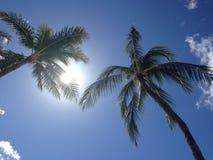 Palm trees against blue sky Stock Photos