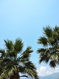 Palm trees against the blue sky. Coast of the warm sea. Palm trees against the blue sky. Hot summer sunny day. The right place and time for vacation royalty free stock image