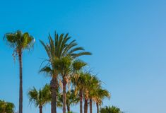 Palm trees against the blue sky. Natural background. Copy space stock photos
