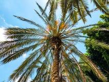 Palm trees against blue sky, Palm trees on tropical coast coconut tree, summer tree. stock photos
