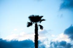 Palm trees against blue sky, Palm trees on tropical coast coconut tree, summer tree royalty free stock photos