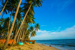 Palm trees against blue sky.Round boats.Vietnam, Mui Ne, Asia Stock Photos