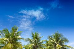 Palm trees against blue sky Stock Photo