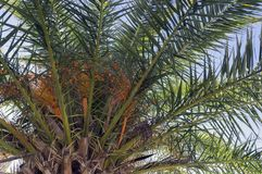 Palm trees. Against blue sky. Sunny day Royalty Free Stock Images