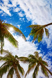 Palm trees against a blue sky in tropical Stock Image