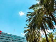 Palm trees against blue sky, Palm trees on tropical coast coconut tree, summer tree. royalty free stock photo