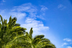 Palm trees against blue sky Stock Images