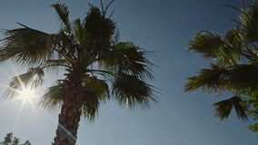 Palm trees against the blue sky with white clouds stock video