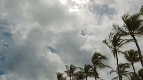 Palm trees against the blue sky with white clouds. Coconut trees against the blue sky with white clouds. Dominican Republic stock footage