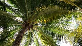 Palm trees against the blue sky with white clouds stock video footage